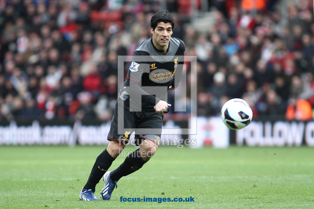 Picture by Daniel Chesterton/Focus Images Ltd +44 7966 018899.16/03/2013.Luis Suarez of Liverpool in action during the Barclays Premier League match at the St Mary's Stadium, Southampton.