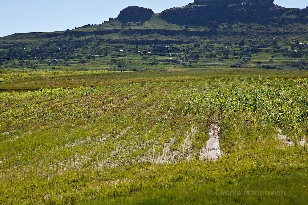 28 January 2011, Lesotho, Maputsoe. Heavy rainfall caused sandy soil to clog up streams and overrun fields. Water sits in the compacted fields.