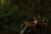 Canaa dos Carajas_PA, 08 de Outubro de 2013.<br /> <br /> Projeto de Conservacao da Arara Azul (Anodorhynchus hyacinthinus) no Mosaico de Carajas.<br /> <br /> FOTO: JOAO MARCOS ROSA / NITRO