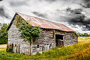 Dark rain clouds add additional drama to this old barn. The robust vine of poison ivy looks as threatening as the clouds.  The image was processed to emulate vintage Kodachrome slide film.