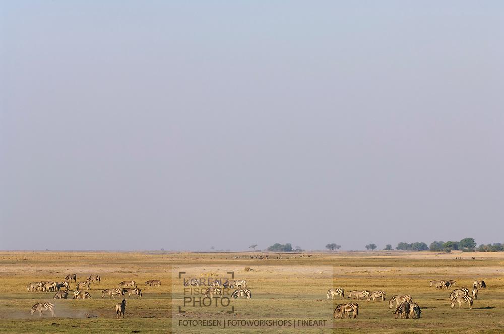 Huftiere im Chobe Nationalpark von Botswana im Bereich der Riverfront
