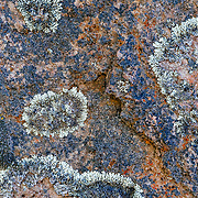 Abstract lichen patterns on a boulder along the Sendero al Fitz Roy trail in Los Glacieres National Park in Argentina.