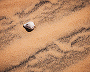 Shell on the dunes of Bazaruto archipelago