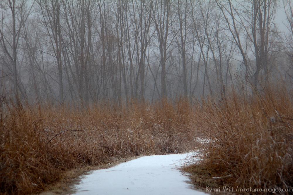 USA, Illinois, Darien. Winter scene in Oldfield Oaks Forest Preserve.