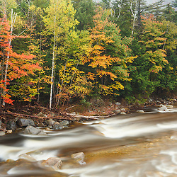 Fall foliage along the East Branch of the Pemigewasset River in New Hampshire's White Mountain National Forest.