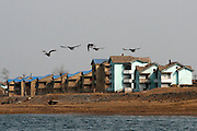 A flock of birds flies near the bank of the Yalu river in Sinuiju, North Korea, on Thursday, Feb. 8, 2007. The Six Party talks have started on the 8th of February in Beijing with the hope of terminating the nuclear program of North Korea