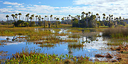 Palm trees and wetlands at Orlando Wetlands Park