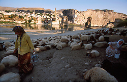 TURKEY HASANKEYF JUL02 - Nomadic shepherds of Kurdish origin attend their herd of sheep at the banks of the Tigris. They are now threatened by the imminent construction of a dam across the river a little downstream. The dam water will submerge the existing town and lower ruins of Hasankeyf and it is estimated that between 15,000 and 60,000 farmers and villagers will be displaced and lose their livelihood...jre/Photo by Jiri Rezac..© Jiri Rezac 2002..Contact: +44 (0) 7050 110 417.Mobile:  +44 (0) 7801 337 683.Office:  +44 (0) 20 8968 9635..Email:   jiri@jirirezac.com.Web:     www.jirirezac.com