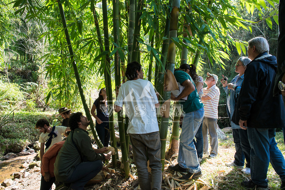 Curso de produção de brotos de bambu no Sitio Vagalume em Rancho Queimado, Santa Catarina. Uma iniciativa pioneira da Bambusc, Associação Catarinense do Bambu, ministrado pelo engenheiro Marcos Marques com assistência do químico Hans Kleine. Fotos de Zé Paiva, Vista Imagens.  Production of bamboo shoots workshop in Vagalume farm at Rancho Queimado, Santa Catarina, Brazil. A pioneering initiative of Bambusc, Santa Catarina Association of Bamboo, taught by engineer Marcos Marques with assistance from chemist Hans Kleine. Photos by Ze Paiva, Vista Imagens.