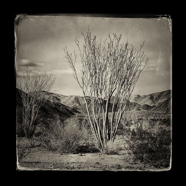 "Charles Blackburn image of a desert landscape in Joshua Tree National Park. 5x5"" print."