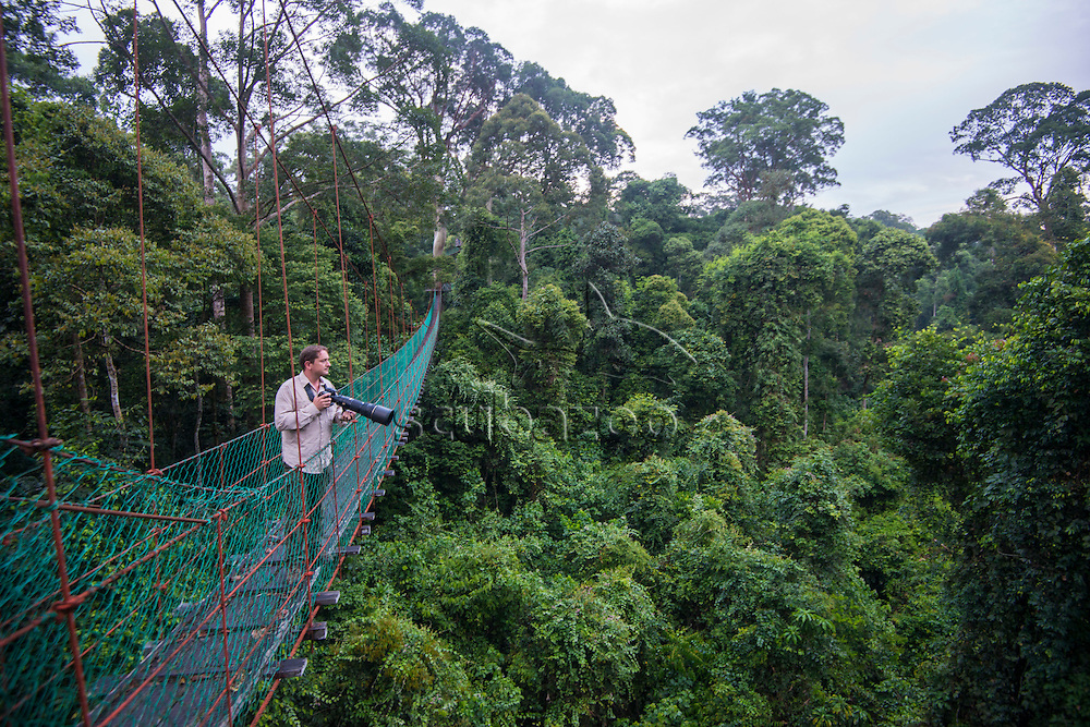 A photographer, Christian Loader, holding a camera, looks out from a canopy walkway over the rainforest at dawn, Danum Valley, Sabah, Malaysia.