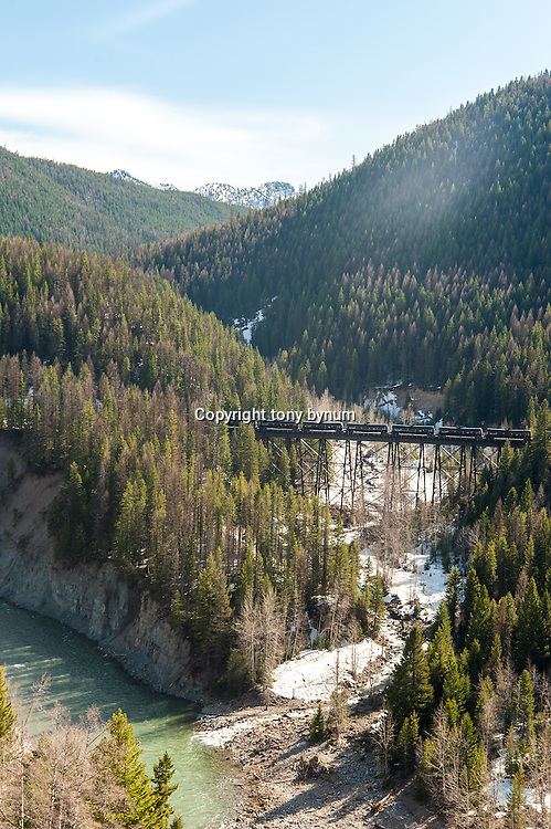 oil train bakken along the flathead river in montana crossing bridge near goat lick, wild and scenic river corridor