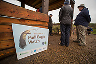 White Tailed Eagle (Haliaeetus albicilla) nest viewing hide run by the community trust in partnership with the RSPB