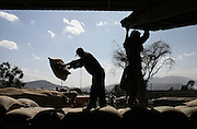 Ethiopian workers load 100 kilo bags of export quality green coffee beans onto a truck at the giant warehouse of the Keffa Export Coffee Processing Plant February 21, 2007 in Addis Ababa, Ethiopia.  Coffee processed at the plant is then loaded onto trucks bound for the port in neighboring Djibouti.