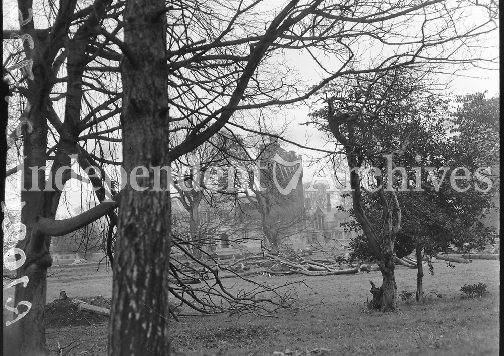 R1021 View, Clontarf Castle with fallen trees in the foreground. 25/03/55. (Part of the Independent Ireland Newspapers/NLI Collection)