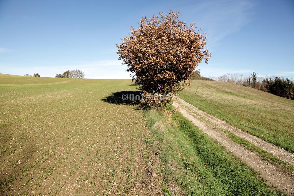 South France rural farming landscape during autumn season Languedoc Aude Razes