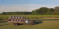 Castello di Borghese Vineyard, Cutchogue, New York, Long Island, Truck, Pinot Noir, panorama