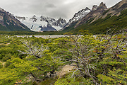 One of the two top hikes in El Chalten takes you to Cerro Torre. Sculpted by fierce Patagonian winds.