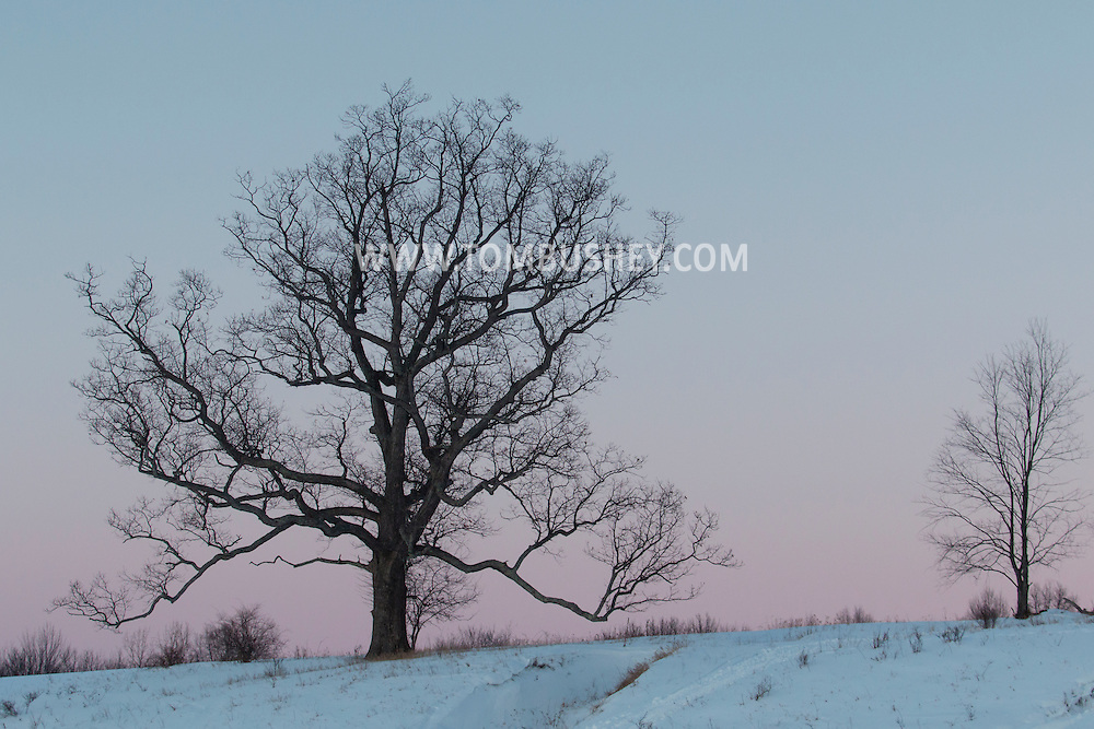 Chester, New York - A large tree in a field is seen against the sky after sunset at Knapp's View Park  on Feb. 17, 2015.
