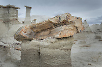 Petrified tree trunk and wood, Bisti Badlands, Bisti/De-Na-Zin Wilderness, New Mexico