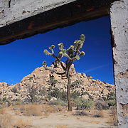 Joshua Tree - Close Window View Old Brick Structure