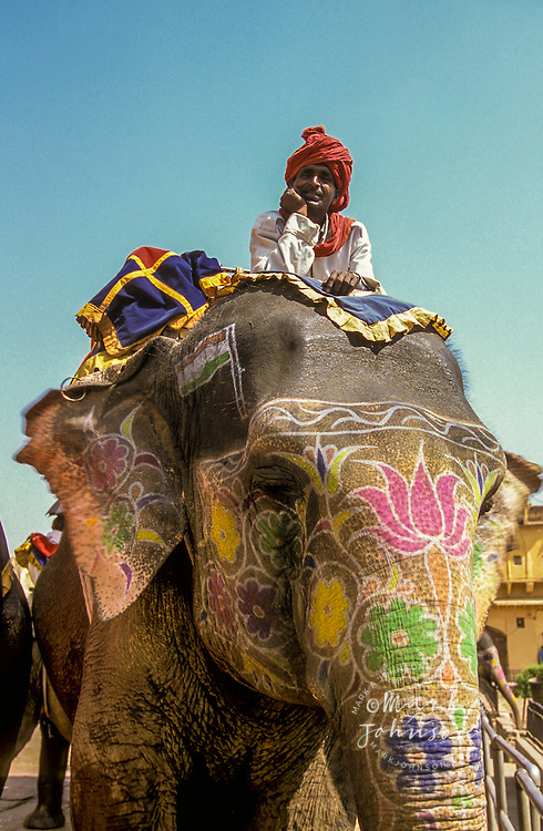 India, Rajasthan, Jaipur, Amber Fort, painted elephant & rider.