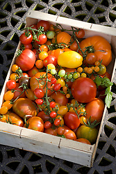 Harvested tomatoes in a wooden box at West Dean Gardens, Hampshire