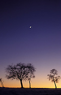 DEU, Germany, Bergisches Land region, fruit trees and moon.....DEU, Deutschland, Bergisches Land, Obstbaeume und Mond...