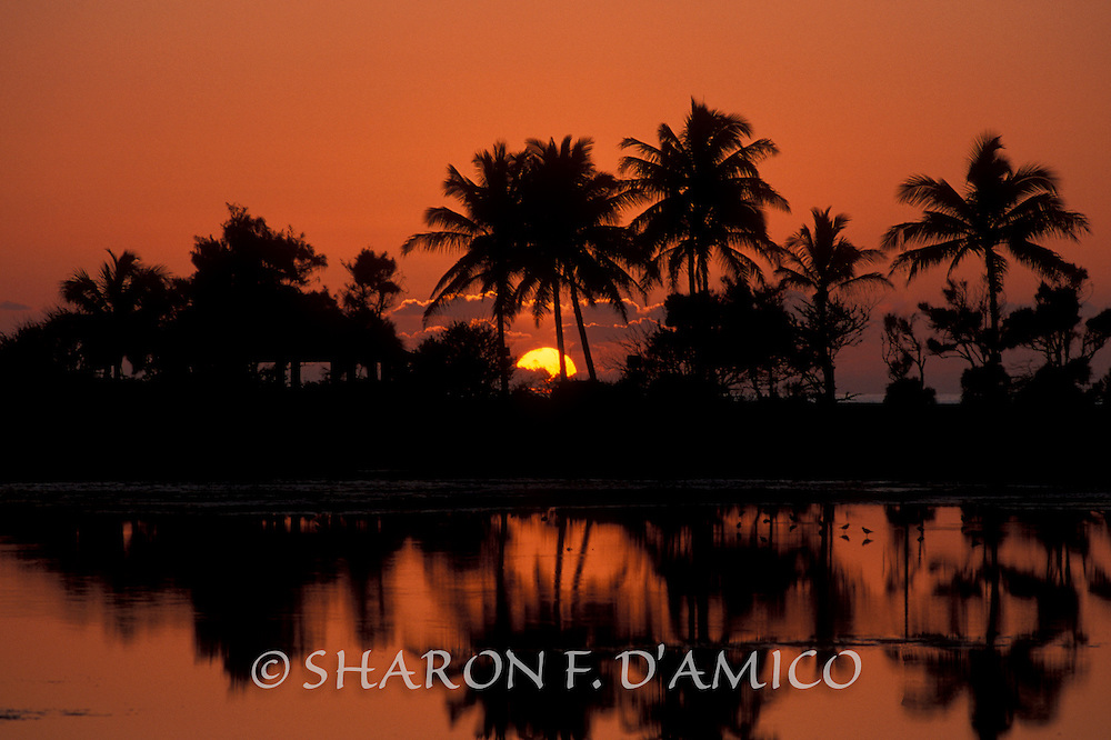 Silhouetted Palm Trees and Orange Sky Reflections, Salt Pond Beach Park, Kauai