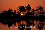 Silhouetted Palm Trees and Orange Sky Reflections, Salt Pond Beach Park, Kauai