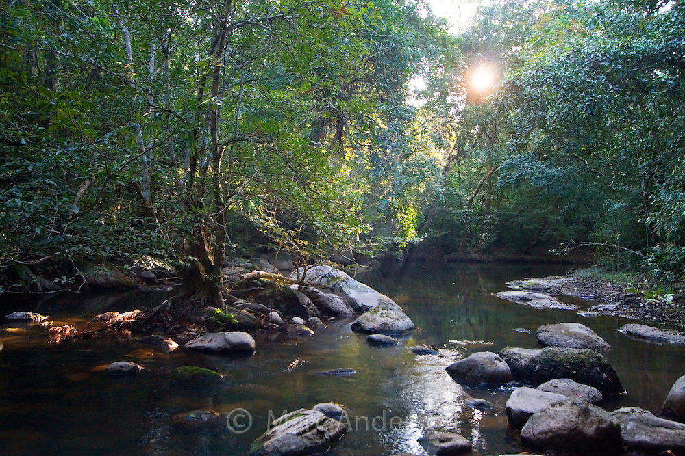 Rainforest stream in Khao Yai National Park, Thailand