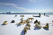 (MODEL RELEASED IMAGE). Taking special care about cracks in the ice, Emil Madsen selects the best spot for some on-shore seal hunting. In the spring this can be dangerous because the ice is breaking up and sometimes huge pieces break off and move out to sea. He is carrying a rifle and home-made wooden gun support. Giant iceberg in background  in the open water beyond the sea ice edge.(Supporting image from the project Hungry Planet: What the World Eats)