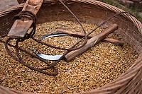 Scythe sitting on top of baskets of grain freshly harvested.