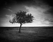 Tree on the prairie