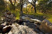 Water flows in a stream in Autumn in Gardner Canyon, Santa Rita Mountains, Sonoran Desert, Coronado National Forest, Sonoita, Arizona, USA.