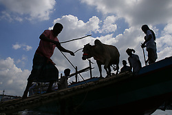 August 27, 2017 - Dhaka, Bangladesh - Bangladeshi traders unloading a vessel of sacrificial animals for the upcoming Eid al-Adha at the cattle market in Dhaka, Bangladesh. (Credit Image: © Suvra Kanti Das via ZUMA Wire)
