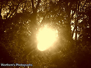 The sun peaking through the trees in a sepia effect for a more unique feel.