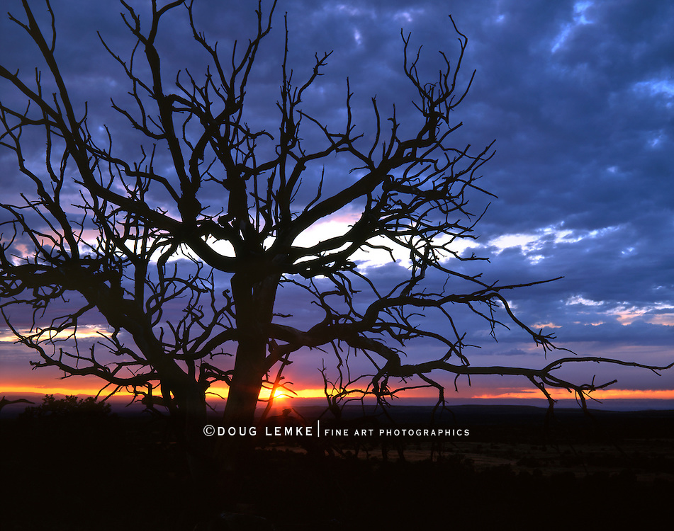 Tree in Silhouette At Sunset, Canyonlands National Park, Utah