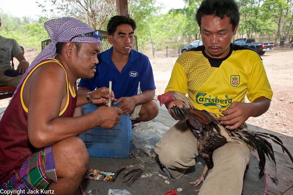 10 APRIL 2010 - PLA PAK, NAKHON PHANOM, THAILAND: A man and his assistants repair the wing of his fighting cock at a pit in rural Thailand. He used feathers from birds his cock defeated in previous fights. The rooster has been in six fights and won them all. He also his fight Saturday. Cockfighting is enormously popular in rural Thailand. A big fight can bring the ring operator as much as 200,000 Thai Baht (about $6,000 US), a large sum of money in rural Thailand. Fighting cocks live for about 10 years and only fight for 2nd and 3rd years of their lives. Most have only four fights per year. Fighting cocks in Thailand do not wear the spurs or razor blades that they do in some countries and most times the winner is based on which rooster stops fighting or tires first rather than which is the most severely injured. Although gambling is illegal in Thailand, many times fight promoters are able to get an exemption to the gambling laws and a lot of money is wagered on the fights. Many small rural communities have at least one cockfighting arena.   PHOTO BY JACK KURTZ