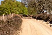 Sandy track in heathland of Suffolk Sandlings, Sutton Heath, Suffolk, England, UK