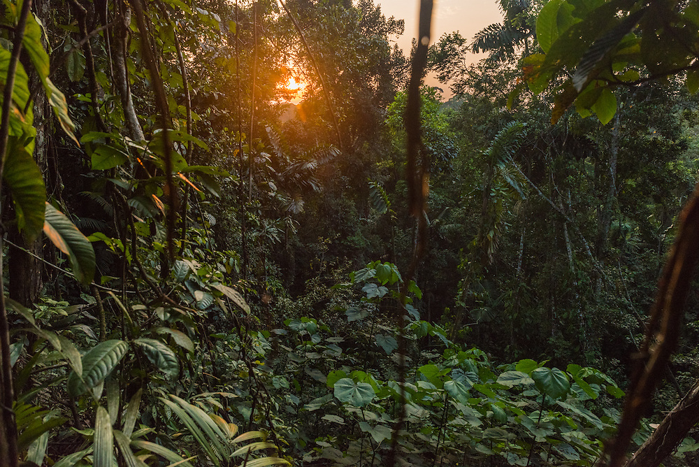 The sun sets above the jungle of Yasuni Reserve, Ecuador.