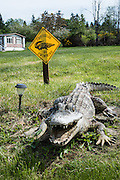 "Startiling crocodile sculpture on Shoreview Drive, Freeland, Whidbey Island, Washington, USA: ""CROCODILES - NO SWIMMING"" sign."