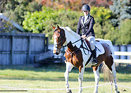 2017-05-07 Dressage Wairarapa - Autumn Ribbon Day Series, Day 2