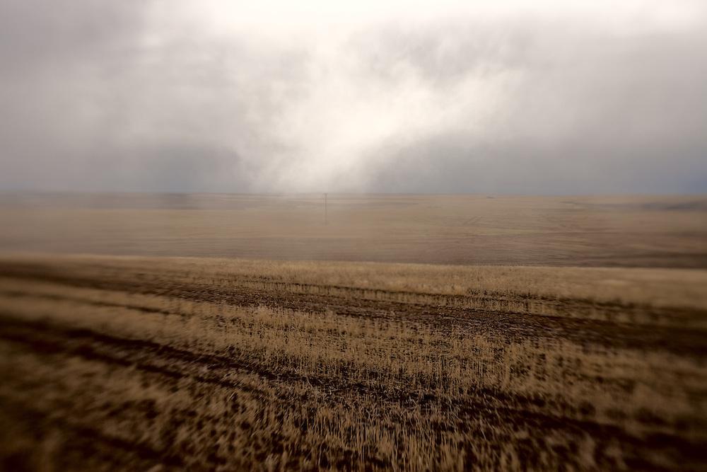 Corn stubble, Oregon