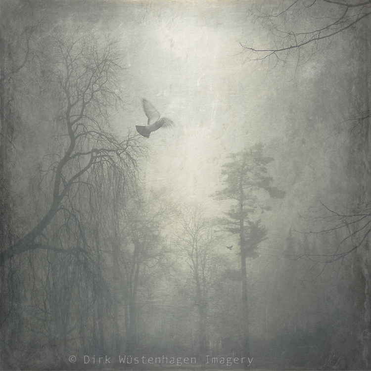 Park on a misty day - zexturized photograph<br />