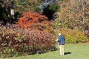 Visitor looking at specimens National arboretum, Westonbirt arboretum, Gloucestershire, England, UK