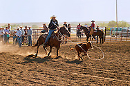Crow Fair, Indian rodeo, Tie Down Roping, Crow Indian Reservation, Montana