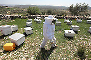 The cooperative has 36 bee hives which are all kept together alongside one house in the village. By keeping all the hives together the cooperative encourages all members to come together to work at one site as a way of building collective work and community links between its members.<br /> Nilli Abu-Rahma, Bil'in, Ramallah, West Bank, Palestine.
