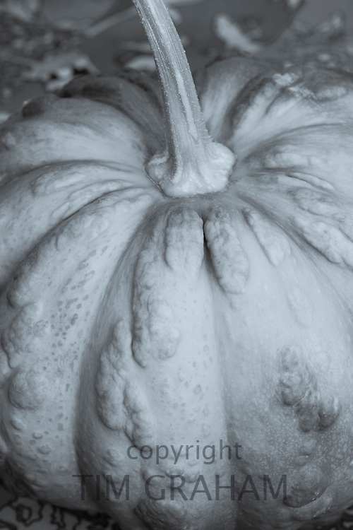 FINE ART PHOTOGRAPHY by Tim Graham<br /> FOOD - Pumpkin, Musquee de Provence