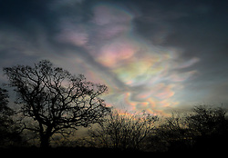© Licensed to London News Pictures. 02/02/2016. York, UK. Nacreous clouds, also known as mother-of-pearl clouds, or rainbow clouds, give off an unusually array of colours over York, northern England. Nacreous clouds are seen mostly during winter at high latitudes like Scandinavia, Iceland, Alaska and Northern Canada and sit in the lower stratosphere some 15 - 25 km high, well above tropospheric clouds.. Photo credit : Anna Gowthorpe/LNP